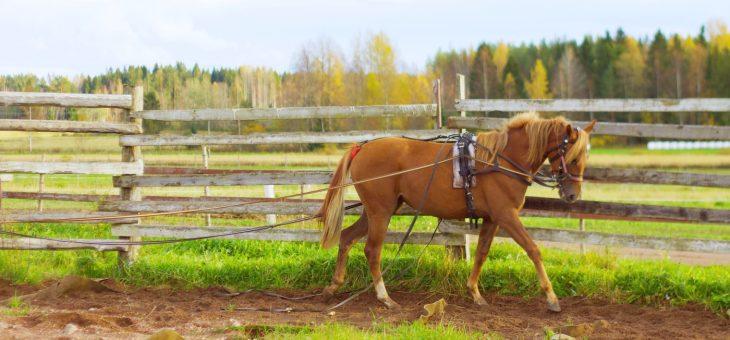Varsan/hevosen opettaminen ajotehtäviin pyöröaitausmenetelmää käyttäen